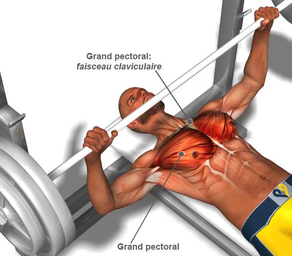 programme-musculation-pectoraux-1